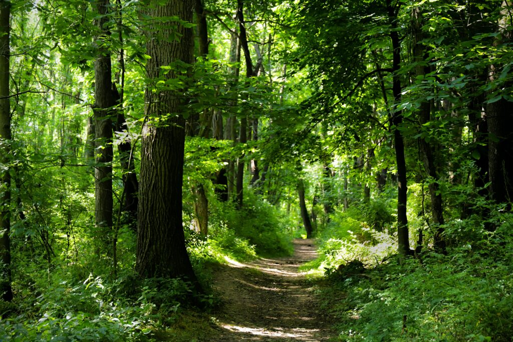 A gentle path cuts through a lovely forest